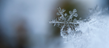 ¿Cómo mejorar la categoría de congelados en el punto de venta?
