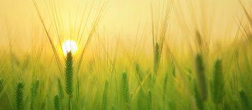 Estrategias de crecimiento sostenible para la industria de alimentación y bebidas