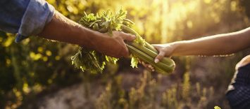 C84 | Sector agroalimentario. Piedra angular de la Agenda 2030