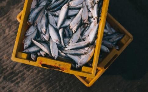Claves para prevenir la presencia de Anisakis en los Productos del Mar