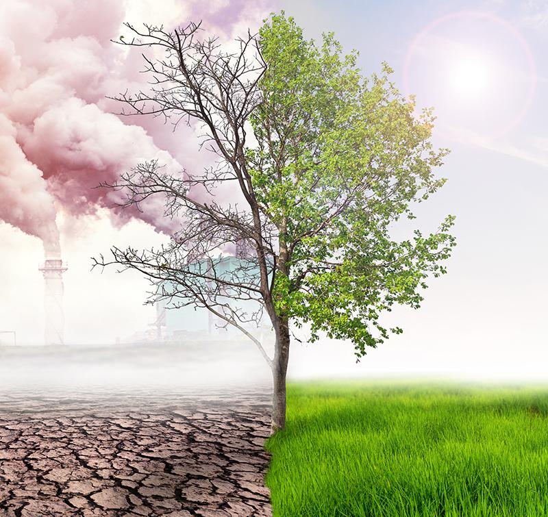 árbol-contaminación-sostenible