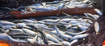 """""""El sector de los productos del mar está haciendo un gran esfuerzo para atender la demanda y garantizar a la vez la seguridad de sus trabajadores"""""""