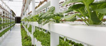 Cultivos verticales: ¿el futuro de la alimentación?
