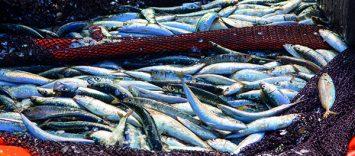 C84 | Directivos de Productos del Mar. Expectativas ante el nuevo consumidor