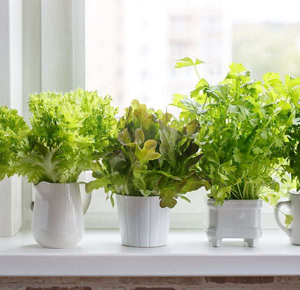 cultivo-en-casa