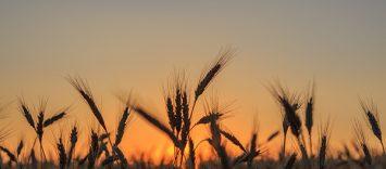 C84 | Las empresas que dan vida al mundo rural