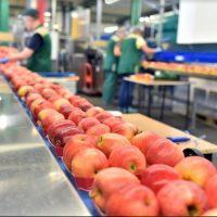 Claves para poner en marcha un plan contra el desperdicio alimentario en tu empresa